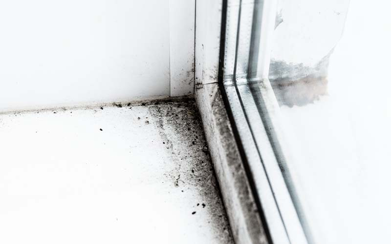 Image of mold by window